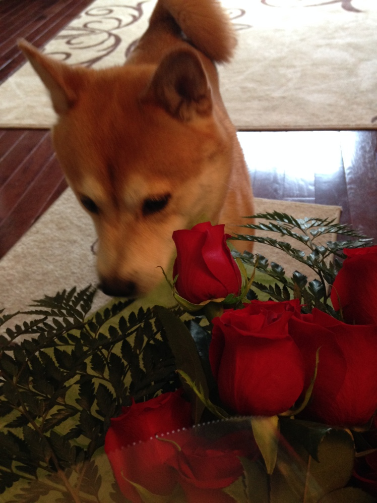Quinlan and My Roses Summer 2015