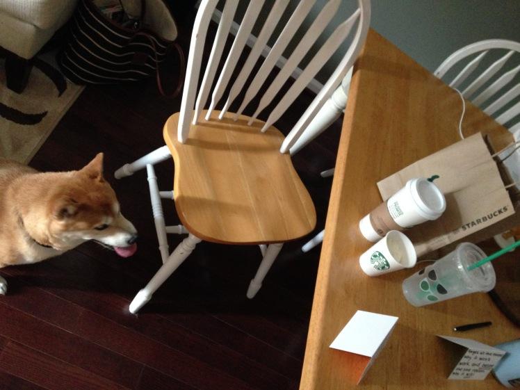 Shiba Loves Starbucks Summer 2015