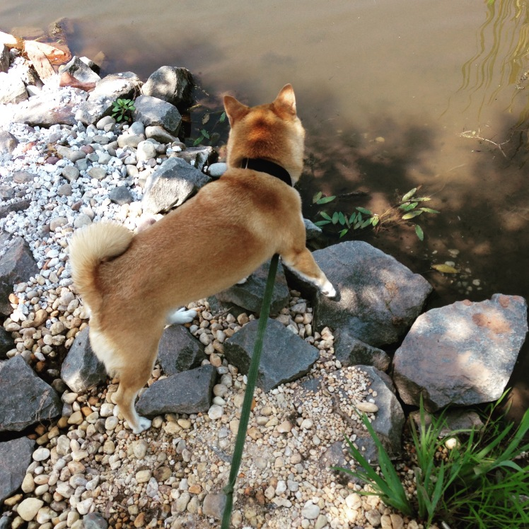 Quinlan Exploring Summer 2015