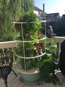 Heppes Tower Garden July 2016