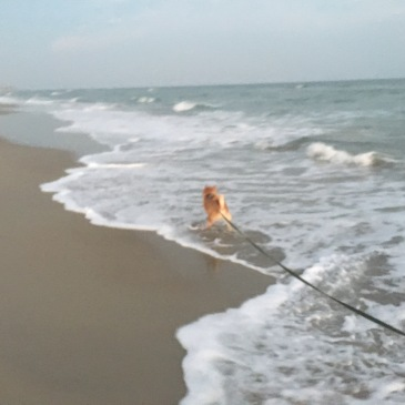 Quinlan at the Beach September 2016
