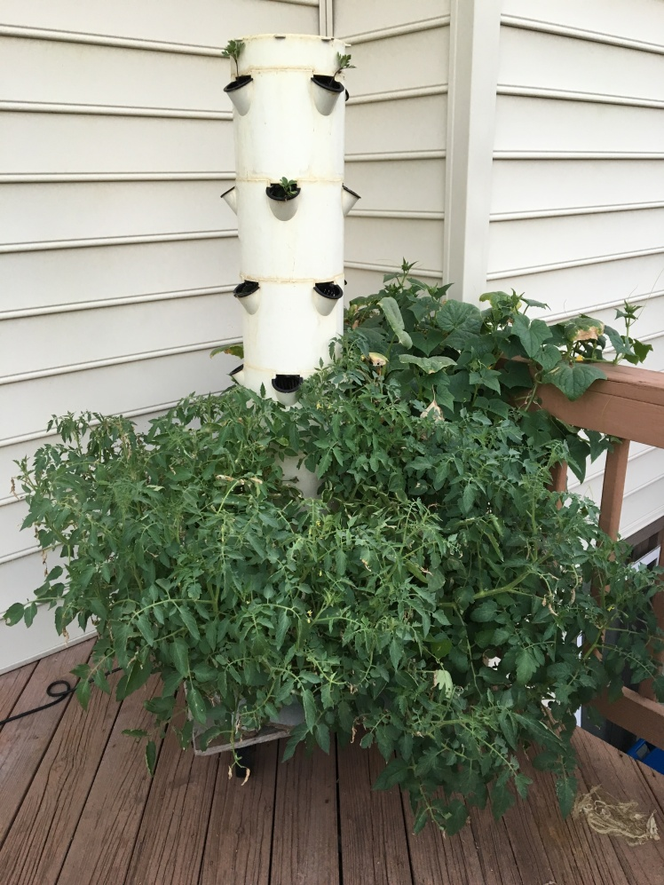 Tower Garden  September 2016