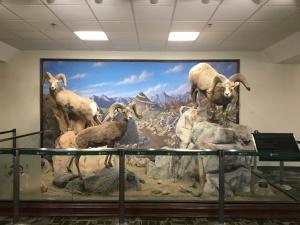 Reno Rejuvenation - Airport Guests September 2016