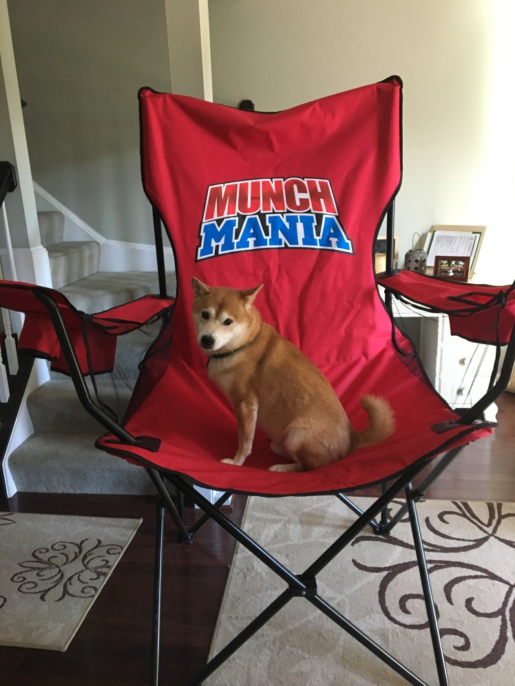 Shiba trying the chair October 2016